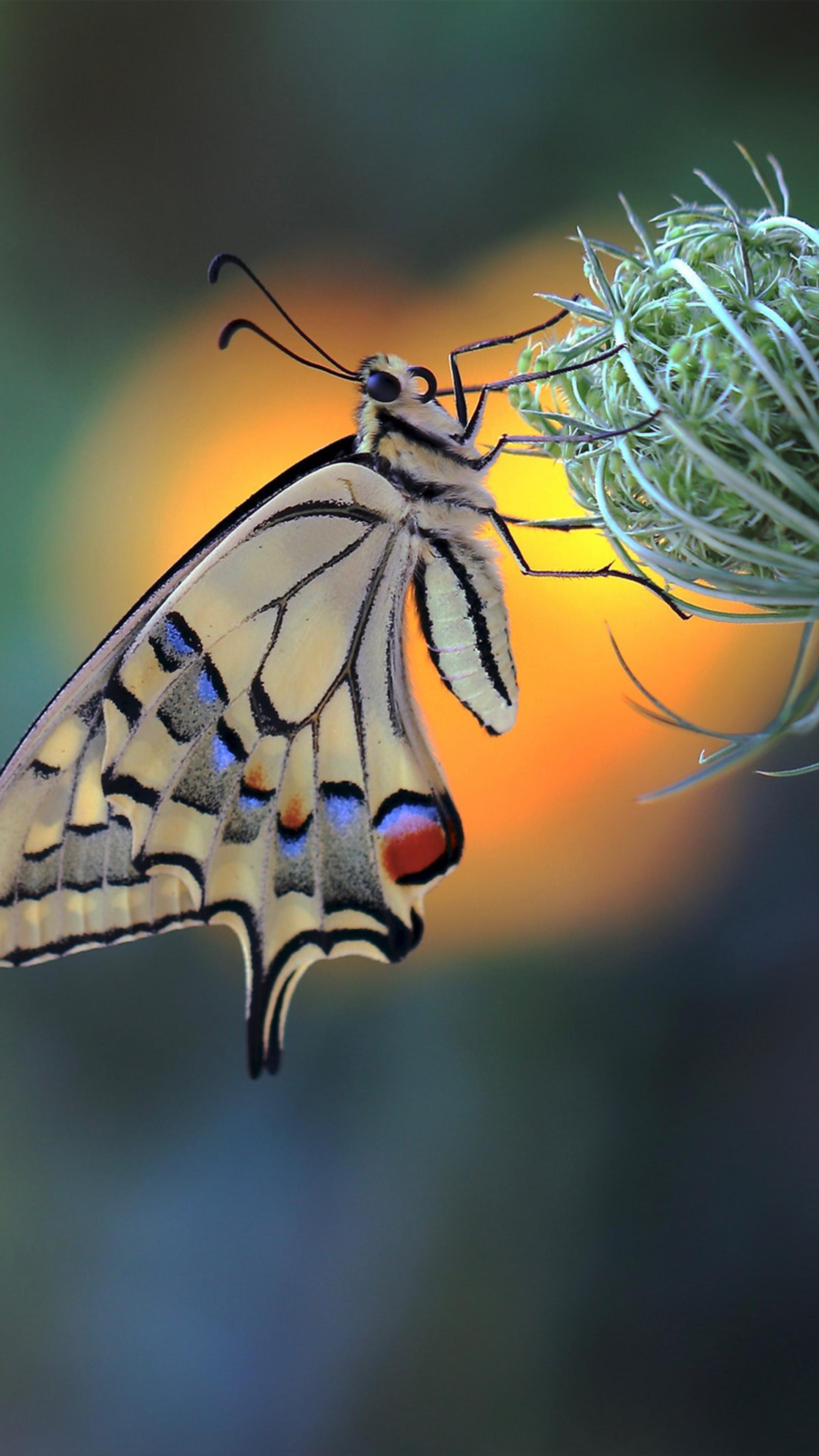Butterfly Insect Flower Macro 4k Ultra Hd Mobile Wallpaper