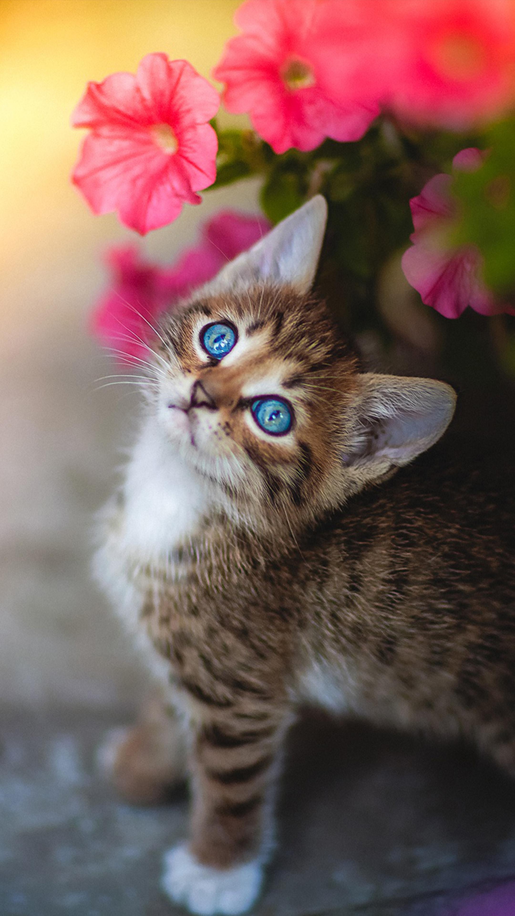 Cute Kitten Blue Eyes Flower 4k Ultra Hd Mobile Wallpaper