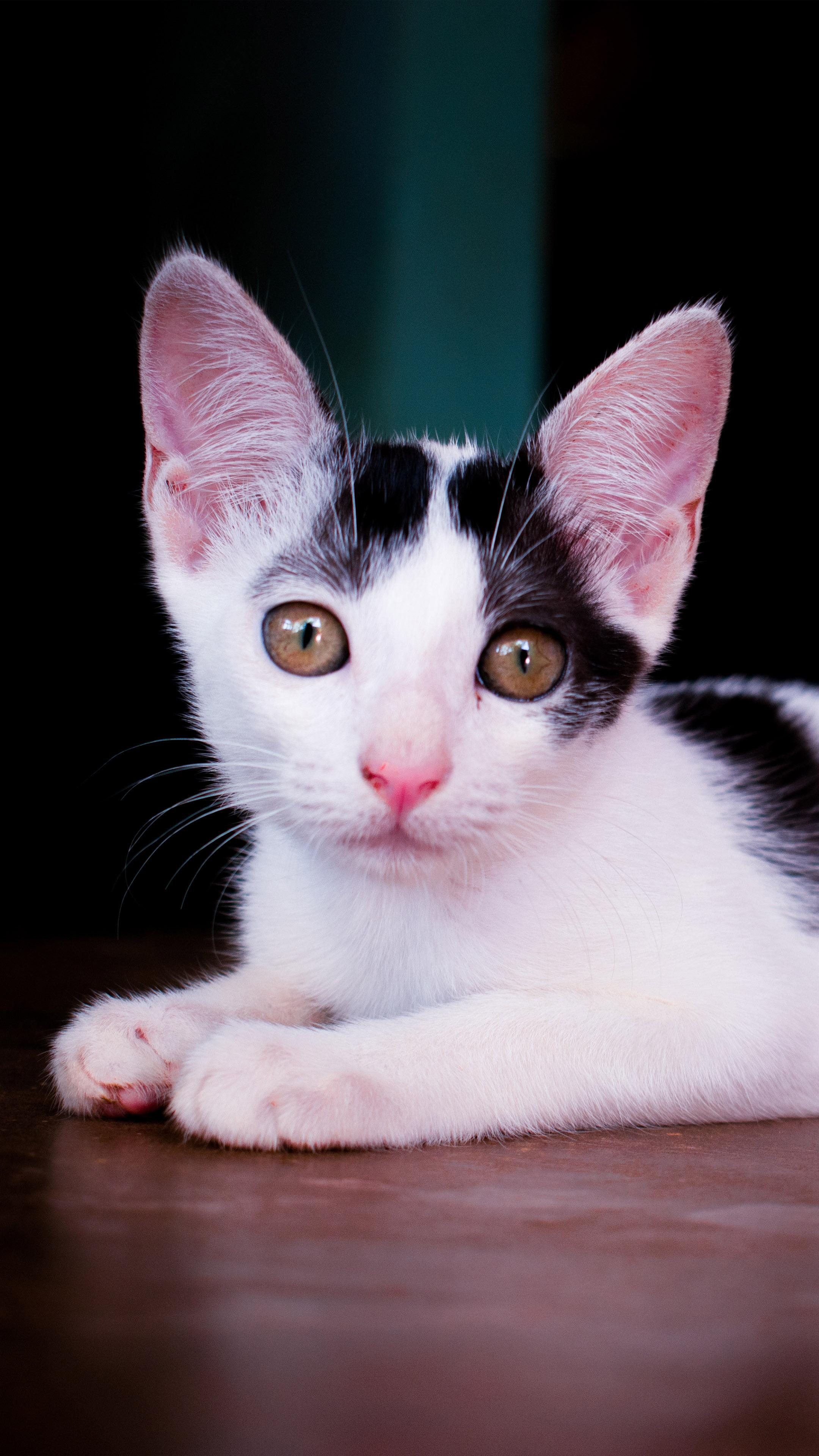 Spotty The Cutest Cat 4k Ultra Hd Mobile Wallpaper