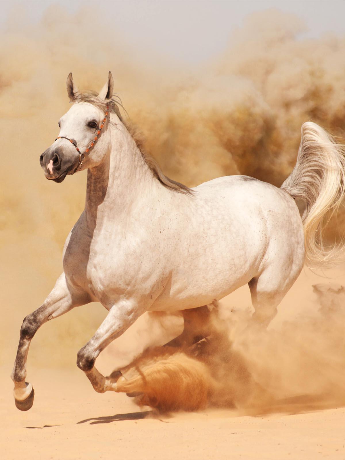 Horse Running On Sand 4k Ultra Hd Mobile Wallpaper
