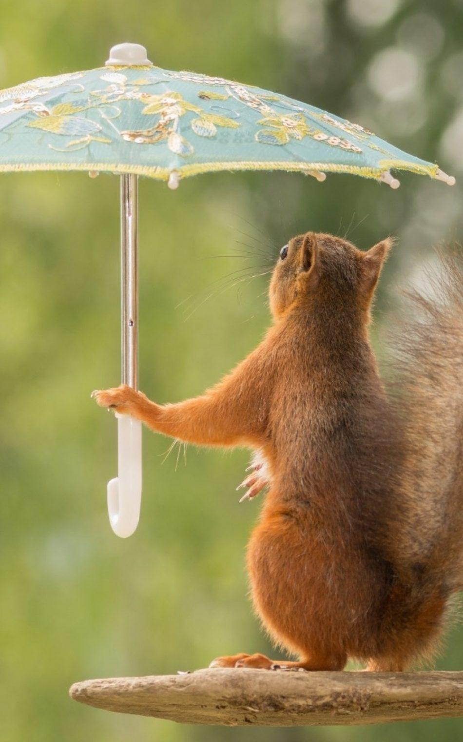 Squirrel With Umbrella