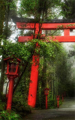 The Rainy Forest of Hakone Japan Preview