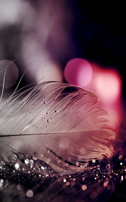 Sparkling Feather Mobile Wallpaper Preview