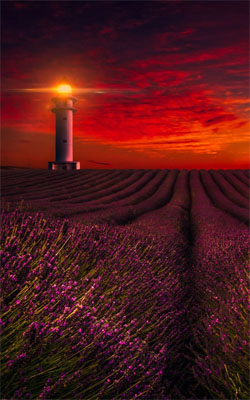Sunset Lavender Field Lighthouse Mobile Wallpaper Preview