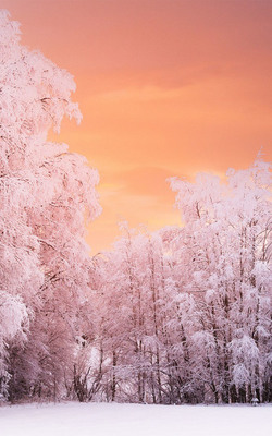 Heavenly Winter Forest Sunset Mobile Wallpaper Preview