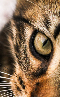 Staring Cat Eye Face Mobile Wallpaper Preview