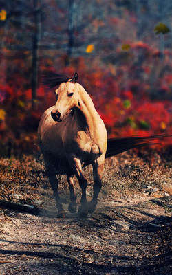 Horse Alone In Forest Mobile Wallpaper Preview