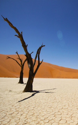 Namib Coastal Desert Mobile Wallpaper Preview