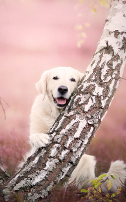 Adorable Dog Waiting For Owner Mobile Wallpaper Preview