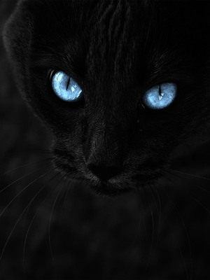 Download Black Cat With Blue Eyes Free Pure 4k Ultra Hd