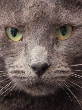 Cat Muzzle Look HD Mobile Wallpaper Preview
