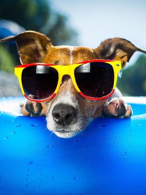 Puppy Enjoying Summer HD Mobile Wallpaper Preview