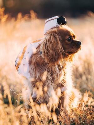 Dog Walking On Grass Enjoying Sunlight HD Mobile Wallpaper Preview