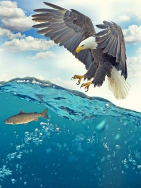 Eagle Catching Fish Underwater HD Mobile Wallpaper Preview
