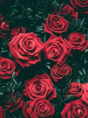 Red Roses HD Mobile Wallpaper Preview