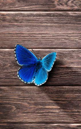 Beautiful Blue Butterfly HD Mobile Wallpaper