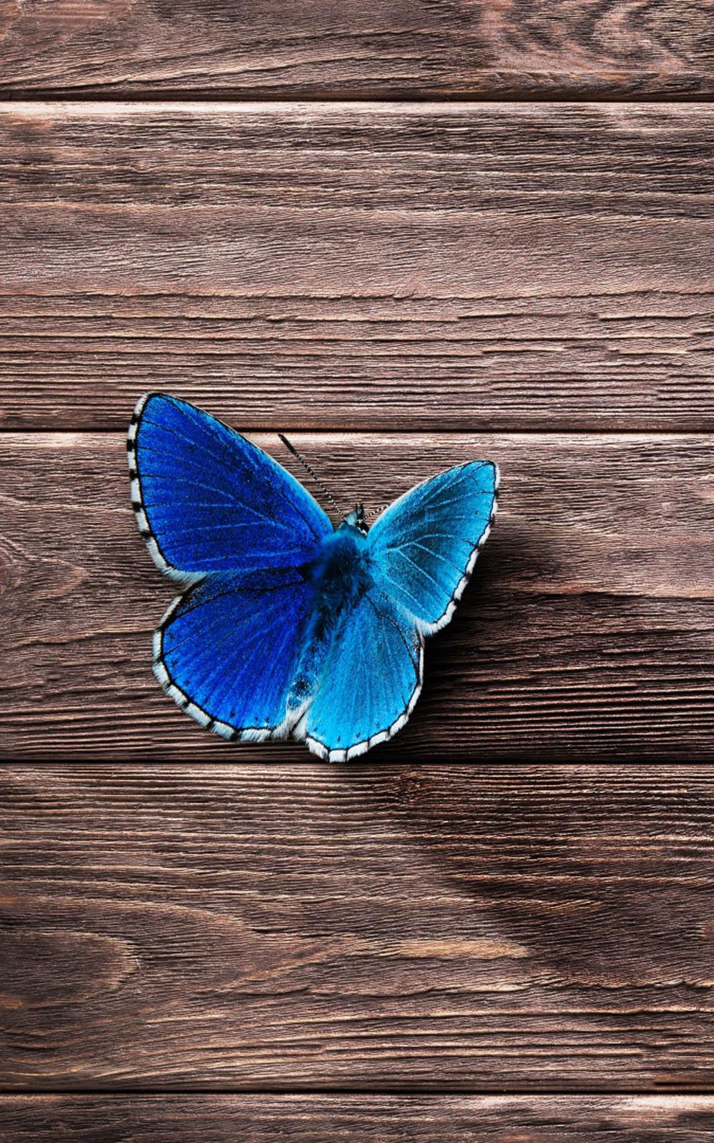 Beautiful Blue Butterfly 4K Ultra HD Mobile Wallpaper