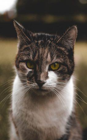 Not A Happy Cat HD Mobile Wallpaper