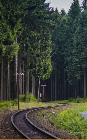 Railway Through Deep Forest HD Mobile Wallpaper