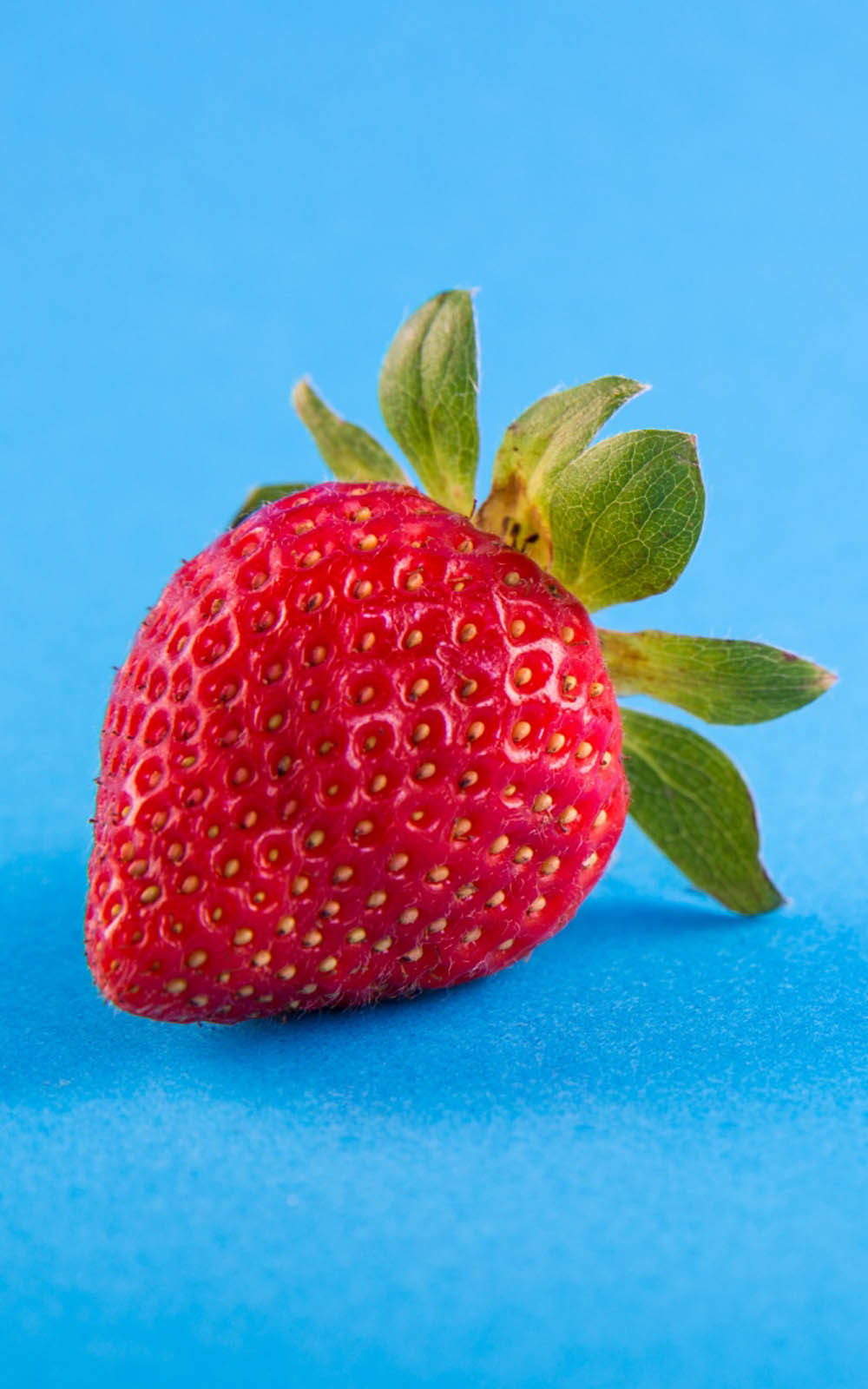 Strawberry Blue Background - Download Free 100% Pure HD ...