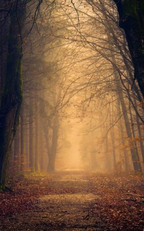 Foggy Autumn Forest Morning HD Mobile Wallpaper