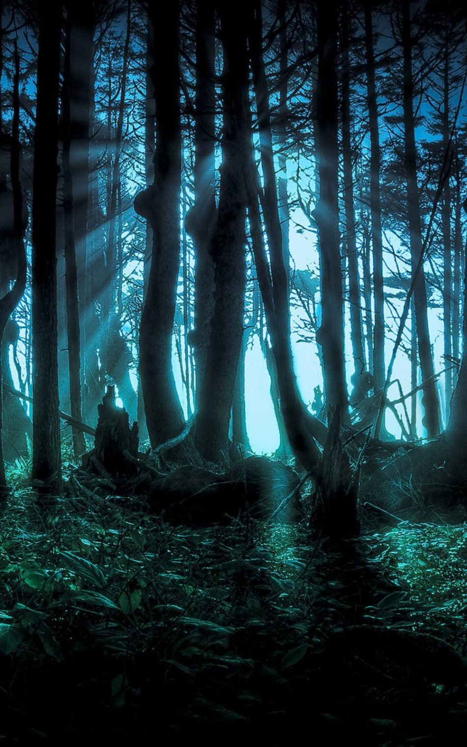 Halloween Scary Forest Free 4k Ultra Hd Mobile Wallpaper