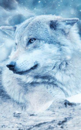 Winter Wolf HD Mobile Wallpaper