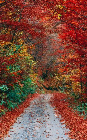 Colorful Autumn Fall Roadway HD Mobile Wallpaper