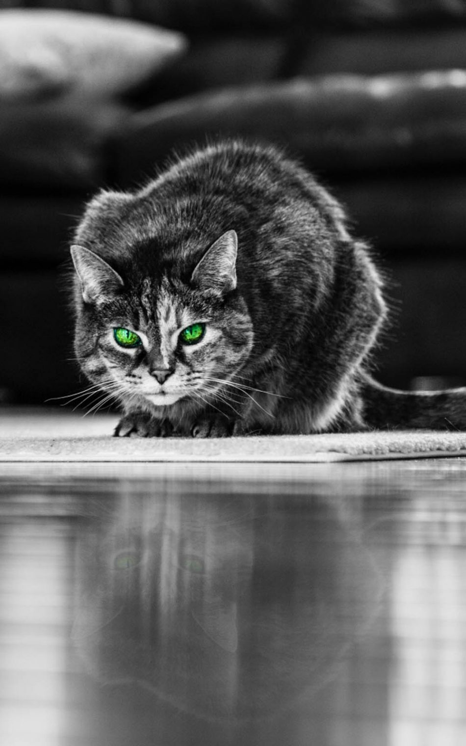 Green Eyed Angry Cat HD Mobile Wallpaper