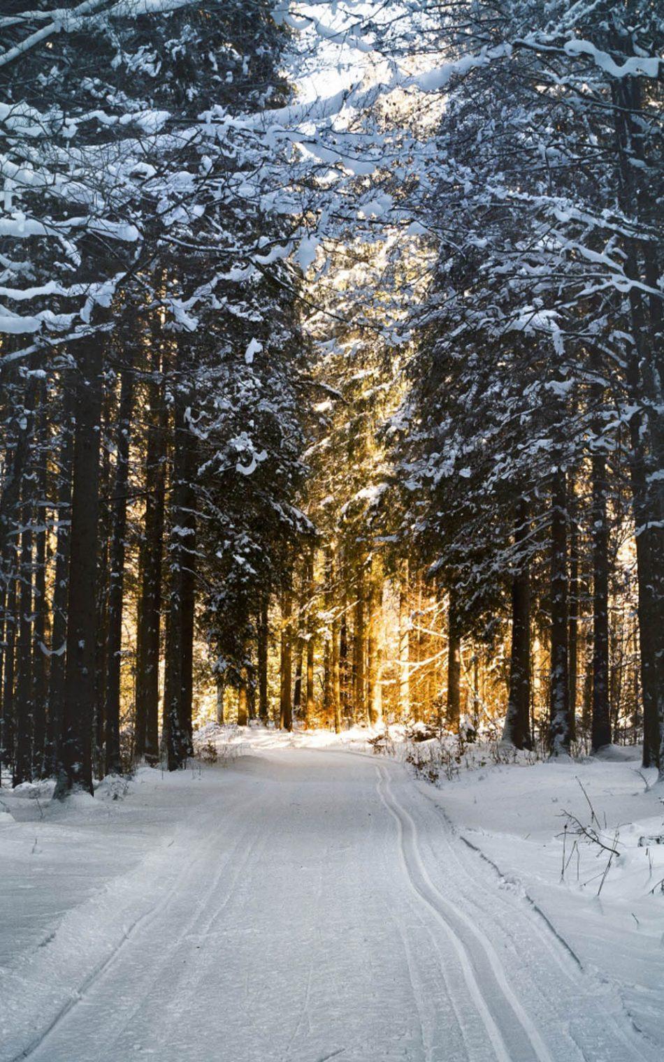 Winter Snow Road Morning Sunrise