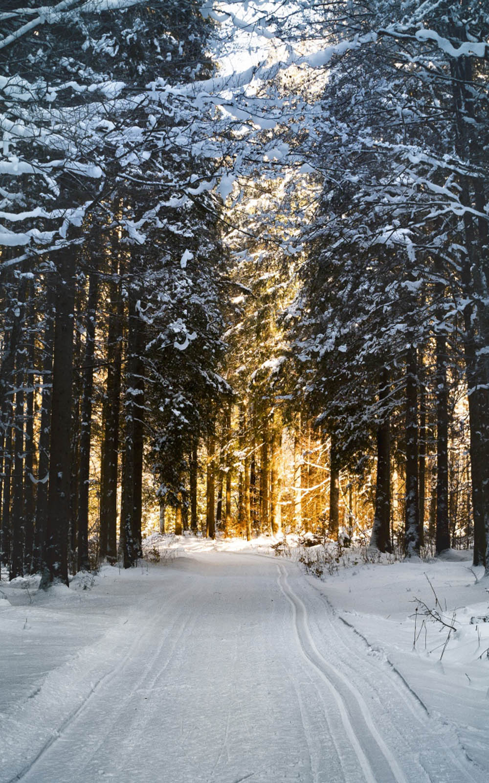 Winter Snow Road Morning Sunrise Free 4K Ultra HD Mobile ...
