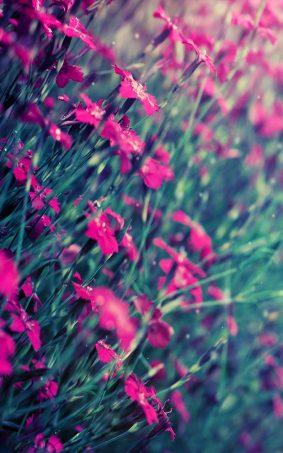 Beautiful Pink Flowers HD Mobile Wallpaper