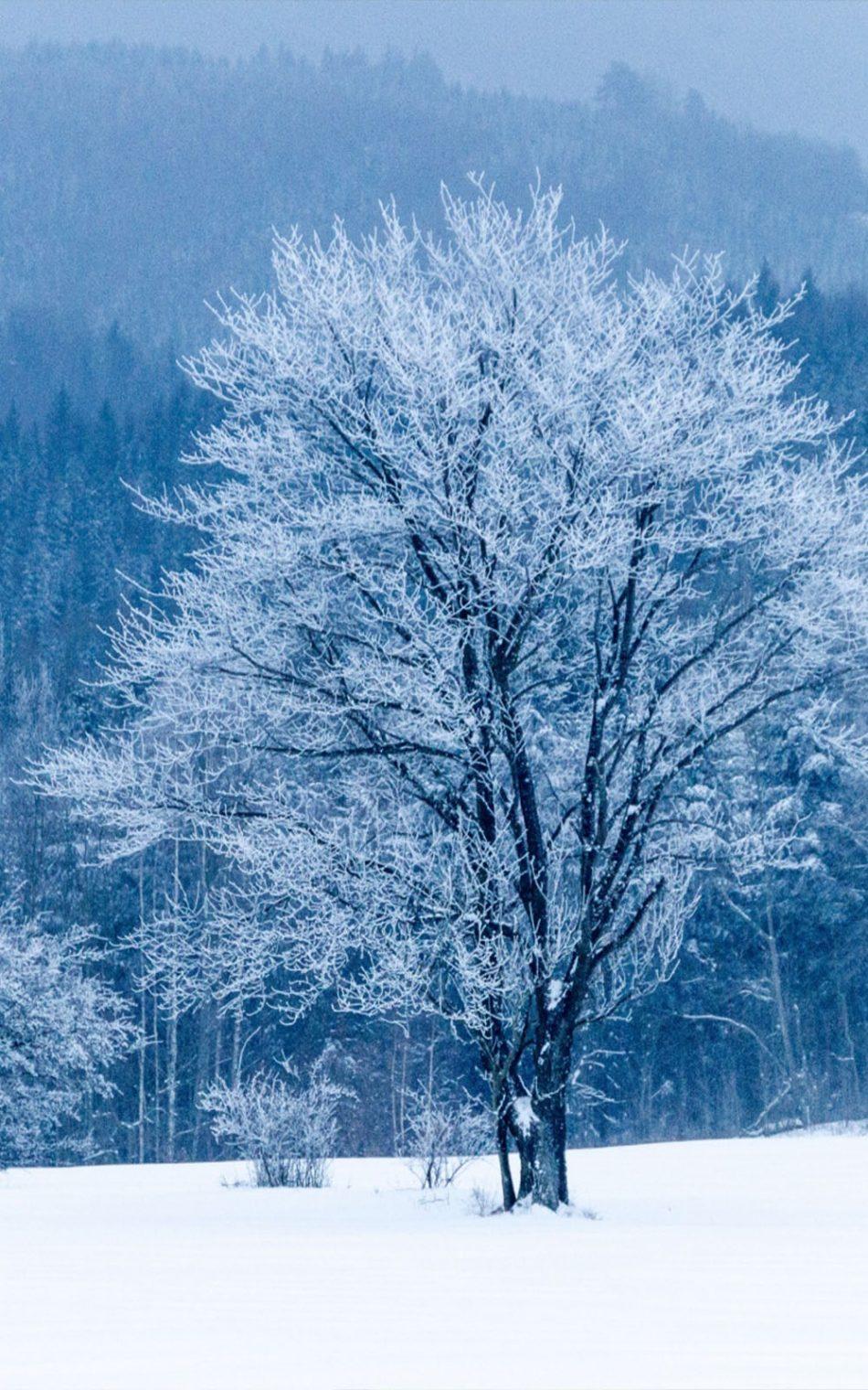 Frozen Tree Snow Winter HD Mobile Wallpaper