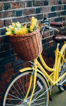 Yellow Tulips Flower Basket & Bike HD Mobile Wallpaper