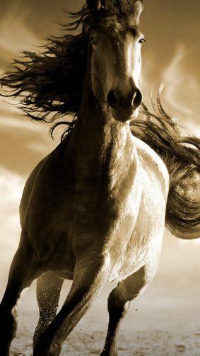 Running Horse HD Mobile Wallpaper