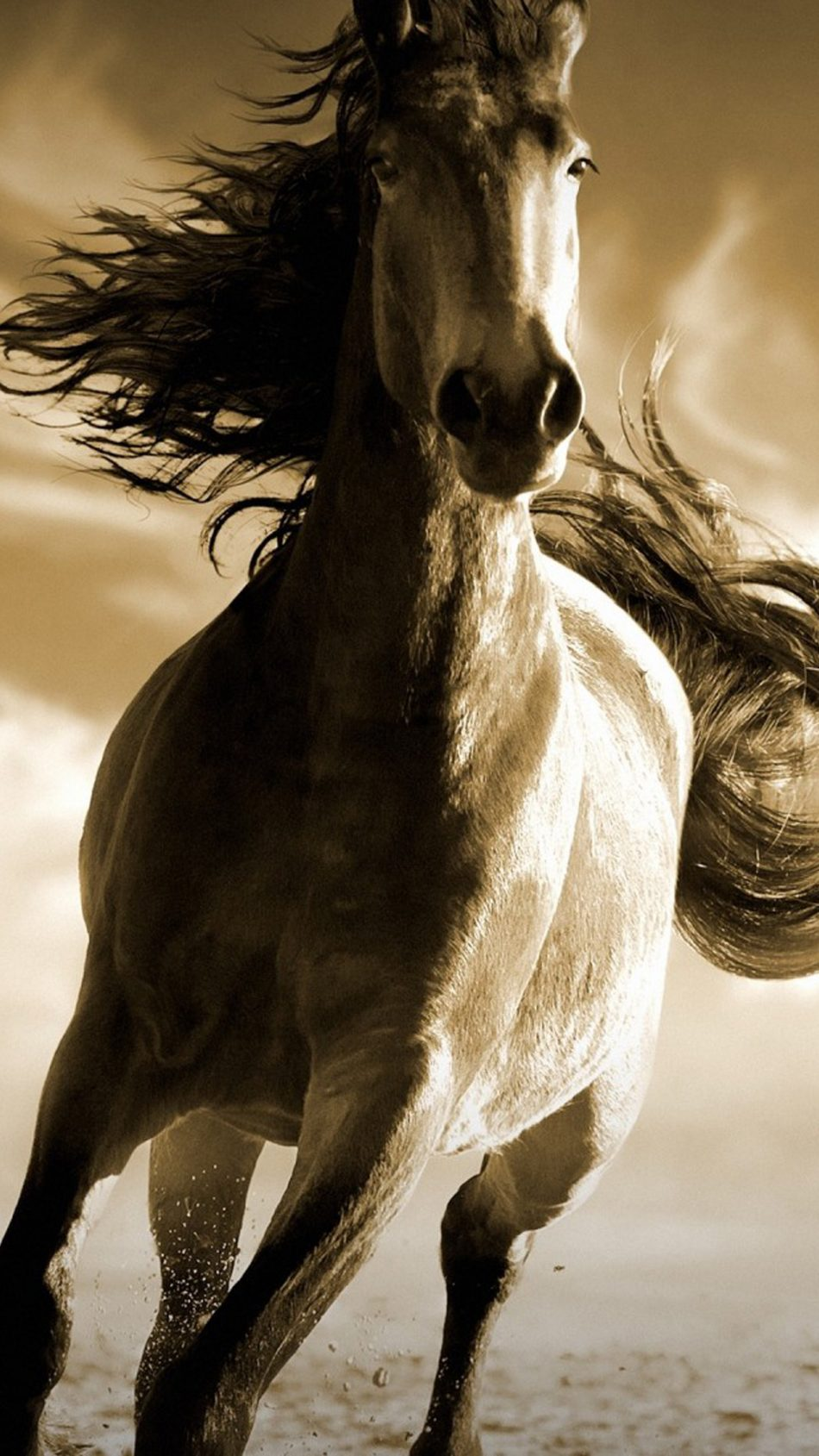 Download Running Horse Free Pure 4k Ultra Hd Mobile Wallpaper