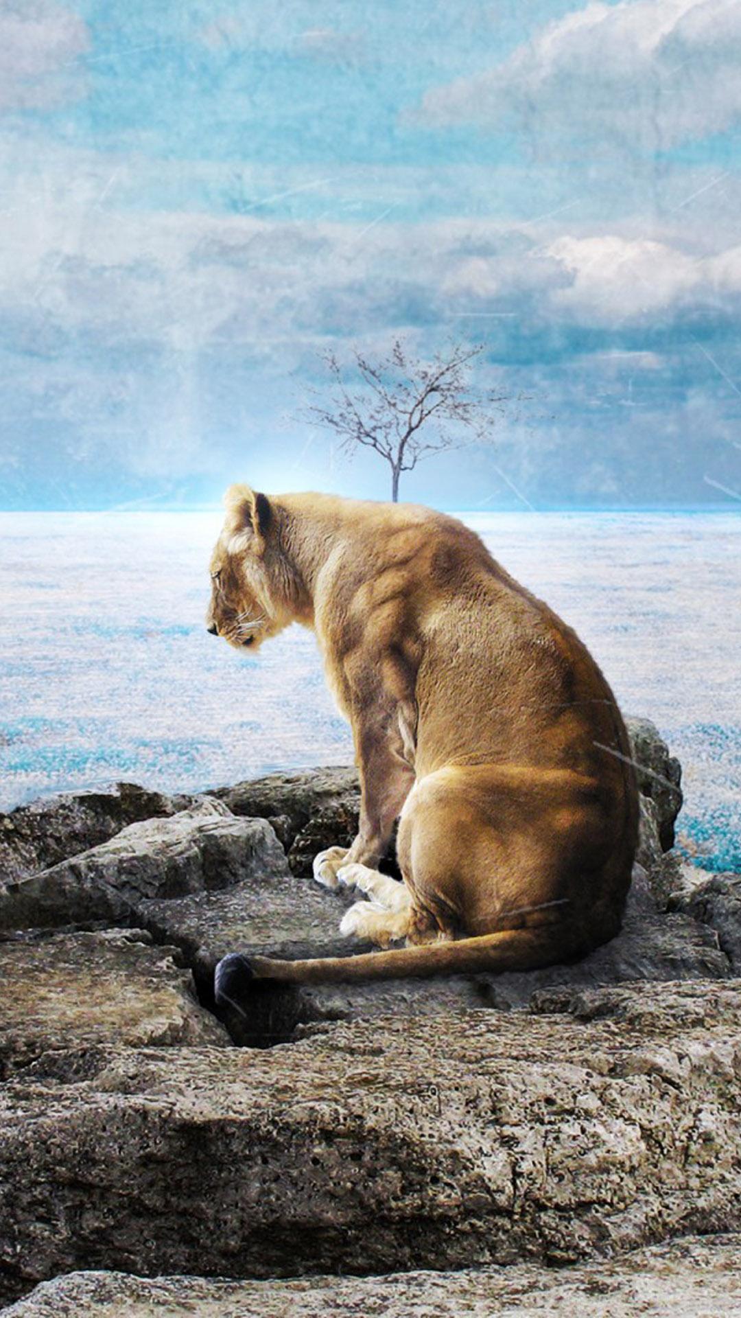 Download Lone Sad Lion Free Pure 4k Ultra Hd Mobile Wallpaper