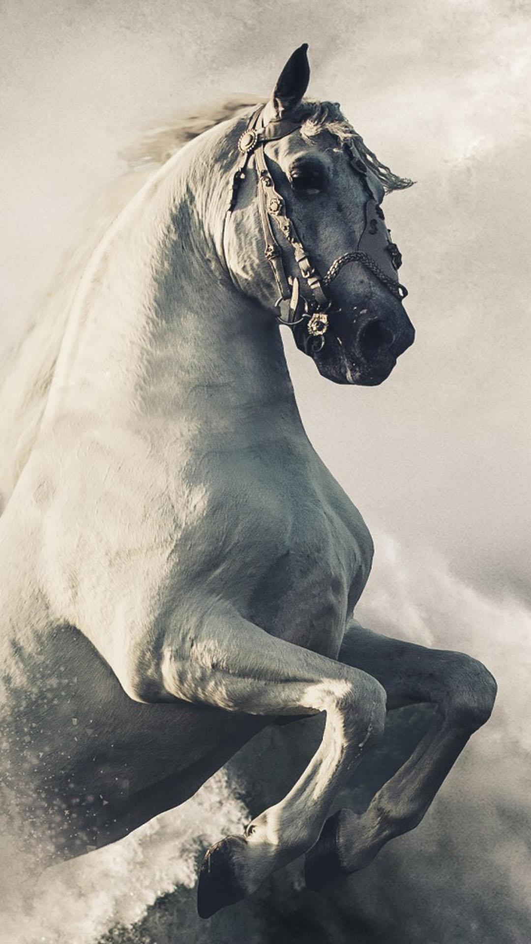 Download Pegasus White Horse Free Pure 4k Ultra Hd Mobile Wallpaper