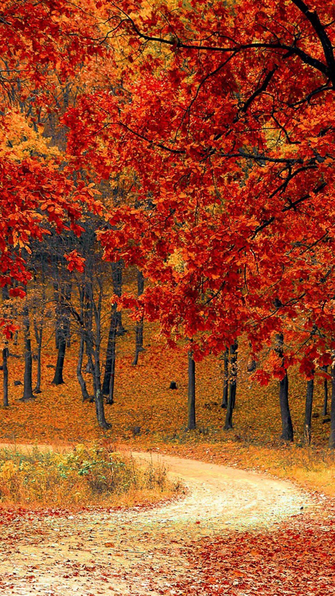 Download Beautiful Autumn Road & Trees Free Pure 4K Ultra HD