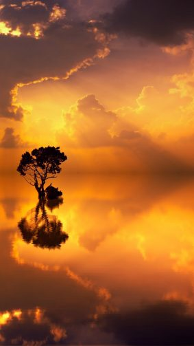 Sunset Seascape Tree Reflection HD Mobile Wallpaper
