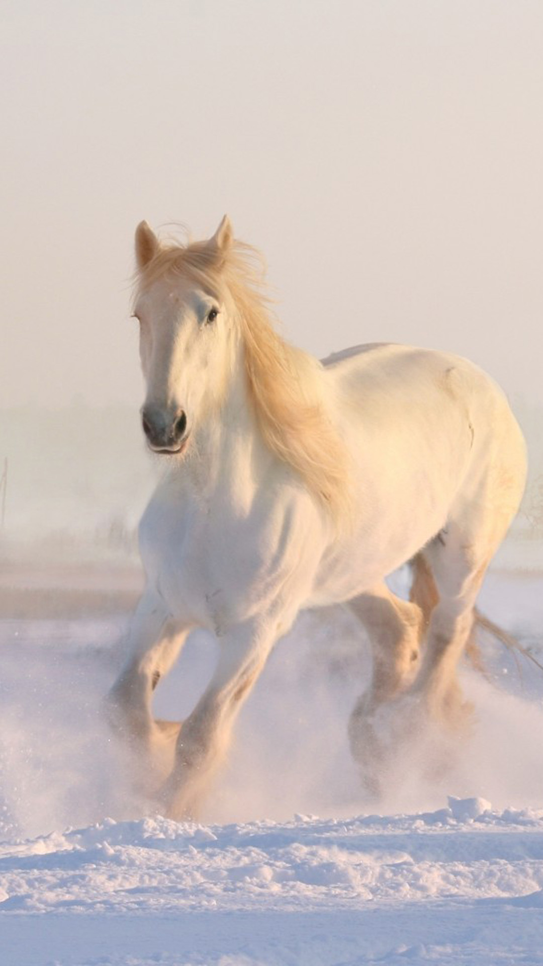 Download White Horse Running Winter Snow Free Pure 4k Ultra