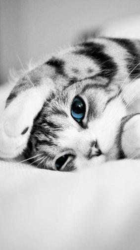 Adorable Cute Blue Eyed Kitten HD Mobile Wallpaper