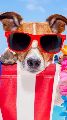 Dog Fun Sunglasses HD Mobile Wallpaper