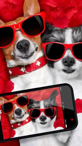 Funny Dogs Taking Selfie HD Mobile Wallpaper