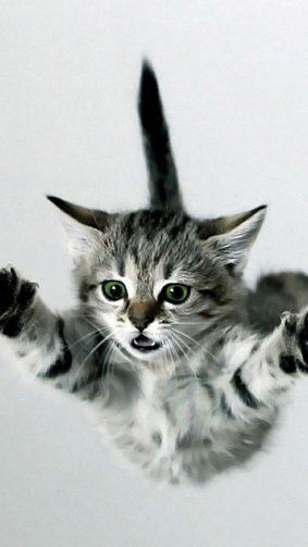 Kitten Free Fall HD Mobile Wallpaper