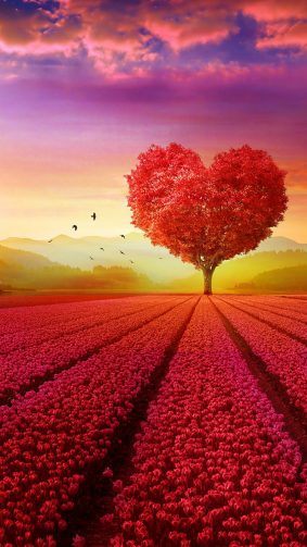 Love Heart Shape Tree Flowers HD Mobile Wallpaper