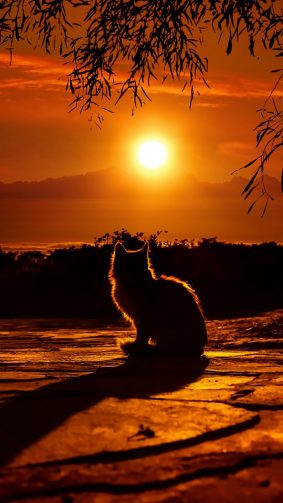 Cat Enjoying Sunset HD Mobile Wallpaper