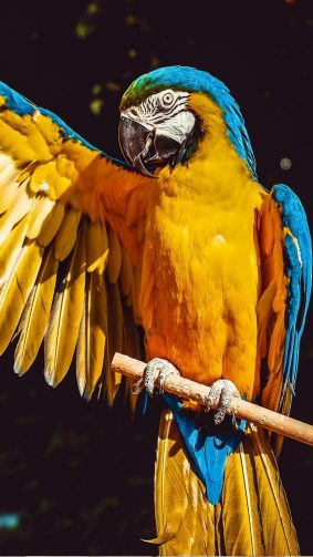 Macaw Parrot Bird HD Mobile Wallpaper