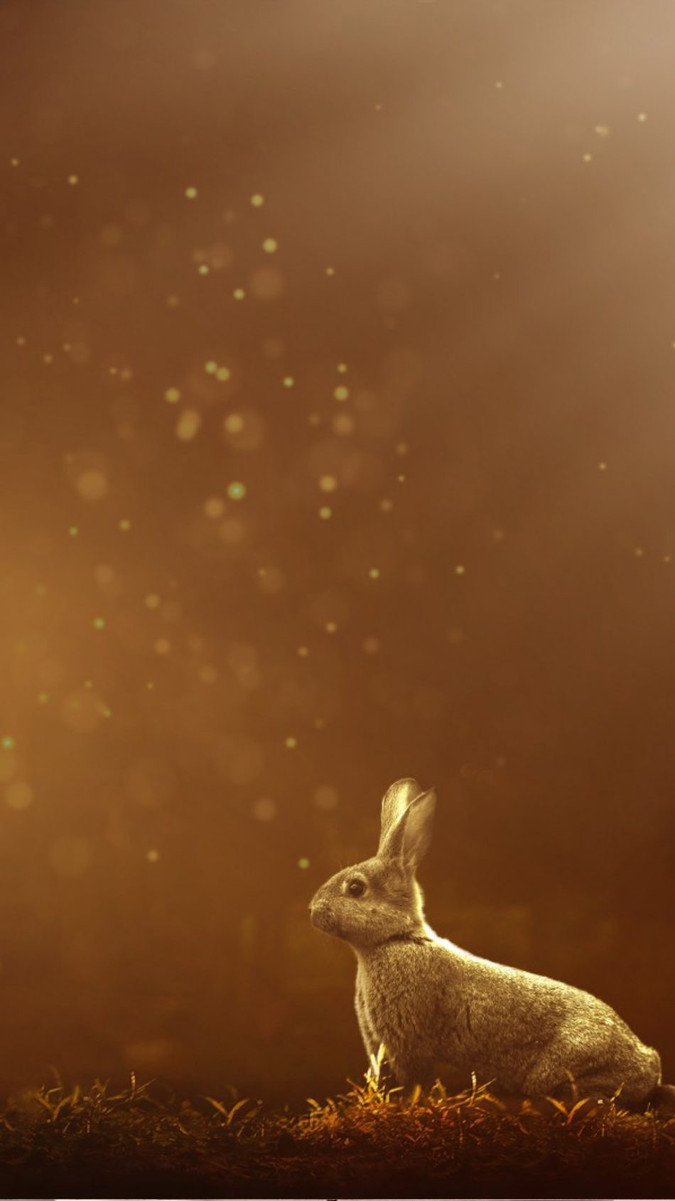 Rabbit Forest Sunlight HD Mobile Wallpaper