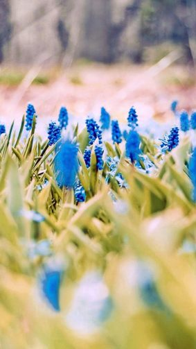 Blue Flowers Spring 4K Ultra HD Mobile Wallpaper